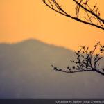 Mt. Moiwayama