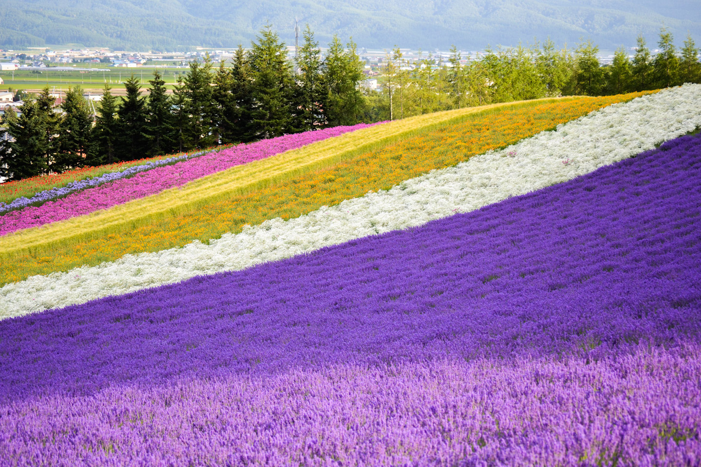 Cruising Down Flower Road: Furano & Biei